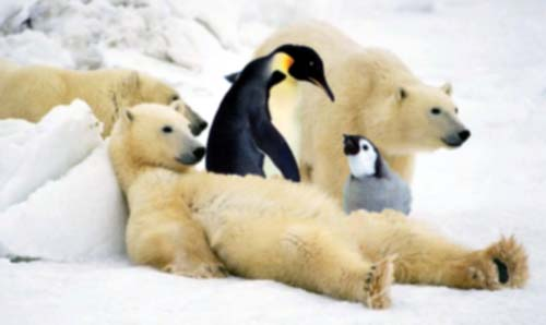 [Obrazek: PolarBear_penguins.jpg]